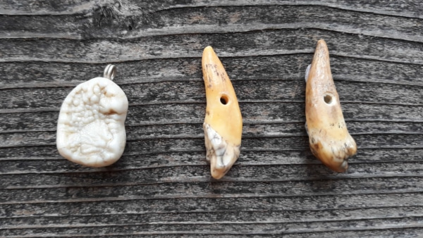 Höhlenbär Zähne