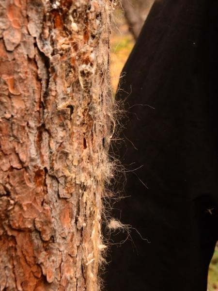 Markierungsbaum von einm Grizzly Bären