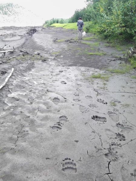 Bären- und Wolfsspuren am Peel River
