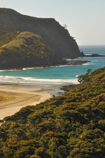 Natürlicher Strand und Dschungel in Neuseeland