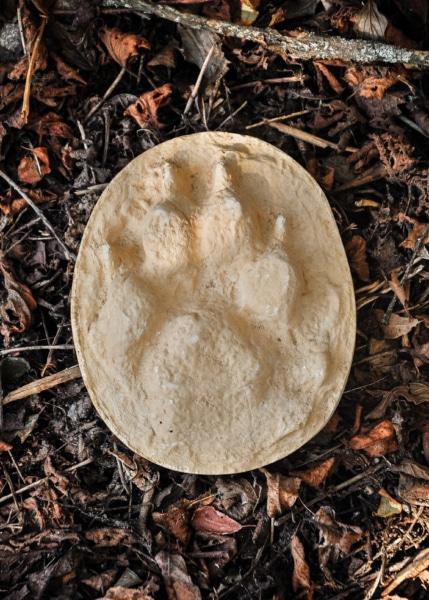 Gips Wolfsspur aus dem Yukon