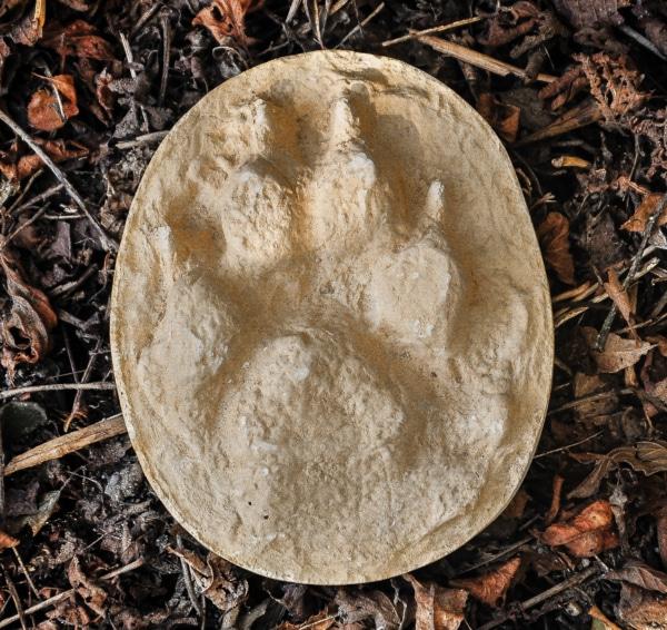 Wolfsspur aus Gips